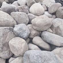桐廬天然景觀石鵝卵石水沖石原石奇石