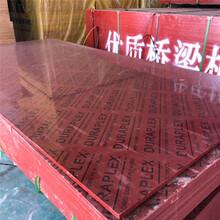 江海区桥梁竹胶板厂家图片