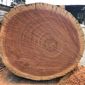 东莞山樟木供应商