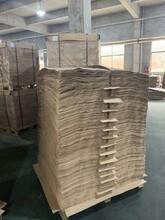 廣州樺木板材批發圖片