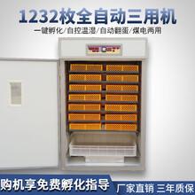 孵化机小型孵化亚博直播APP,亚博赛事直播|首页家用孵化设备176型养殖设备图片