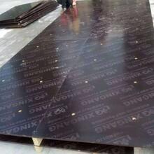 东莞覆膜板建筑模板供应商图片