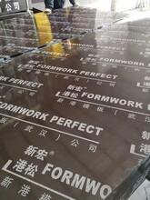 阳江建材竹胶板供货商图片