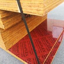 台州建材竹胶板加工报价图片