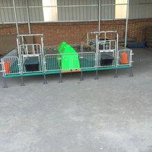 廣東豬場專用熱鍍鋅材質母豬復合產床定位欄保育床產保一體圖片