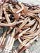畢節電纜回收畢節電纜回收廠家持續上漲