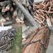 金沙縣電纜回收庫存電纜回收金沙縣量大從優