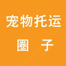 丽江宠物托运服务飞机火车汽车托运宠物服务国内国际图片