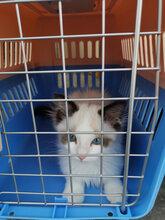 德宏宠物托运飞机火车汽车专业猫狗托运国内国际图片