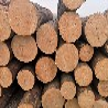 建筑木方加工厂