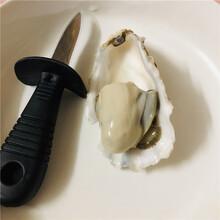 低價乳山生蠔批發3兩只乳山海蠣子批發一手貨廠家批發圖片