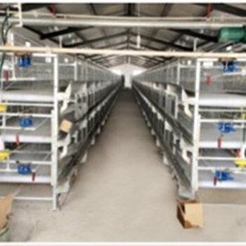 供應雞籠生產層疊式階梯式蛋雞籠自動出籠肉雞籠設備
