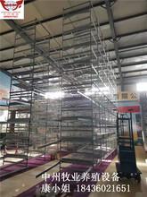 中州牧業廠家生產蛋雞籠自動化雞籠設備六層雞籠設備圖片