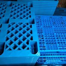东丽区回收托盘、木托盘、塑料托盘、金属托盘、卡板回收