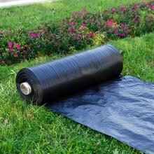 園藝除草布防草布透氣保濕廠家歡迎詢價