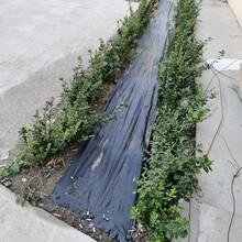 廠家防草布地布果樹除草布價格低廉