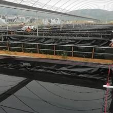 翔实土工膜,德州HDPE土工膜生产图片