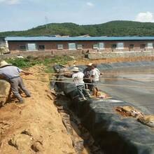 魚塘土工膜廠家直銷圖片