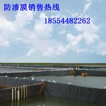 聚乙烯土工膜蓄水池PE土工膜圖片