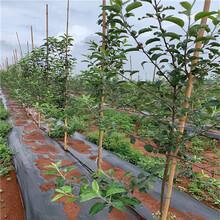 園林綠化用園藝防草布