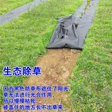 園藝防草布黑色90g透氣滲水多種規格歡迎詢價