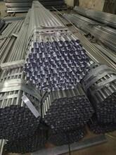 瀘州銷售大棚管行情圖片
