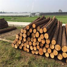 宣城河道木桩批发价格图片