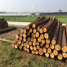 上海防洪木桩厂家加工图片