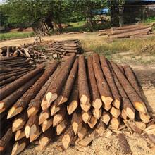 滁州河道木桩批发图片