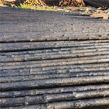 资讯:威海竹栏杆价格图片