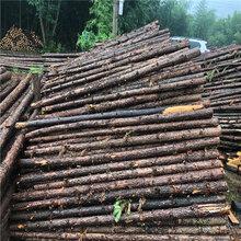 快讯:巢湖河道木桩批发零售图片
