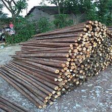 宣城防洪木桩厂家批发图片