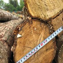 亳州杉木桩批发图片