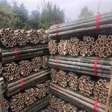 快讯:镇江松木桩国营林场出货图片