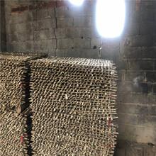 推荐:宝山鸭棚竹制造商图片