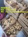 麻羽綠殼蛋雞苗,笨雞苗土雞苗批發養殖