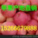 烟台纸荚膜红富士苹果多少钱