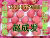 烟台纸荚膜红富士苹果绿色食品