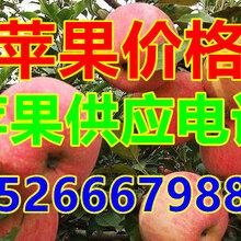 全国精品红富士苹果多少钱图片