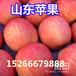 红星苹果价格红星苹果产地批发价格红星苹果行情