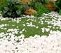 白色圓石子園林景觀日式枯山水廠家白色水洗石水磨石
