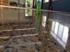 萊西工業地坪環氧地坪廠家施工來電咨詢