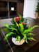 花都辦公室植物出租價格