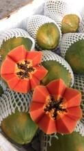 遼寧紅心木瓜價格圖片