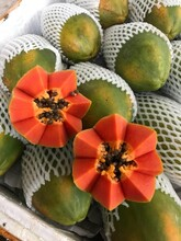 鶴崗紅心木瓜市場價格圖片