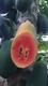 紅心木瓜圖