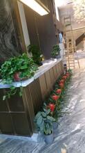 新洲区写字楼绿植租赁服务图片