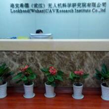 江岸区办公室绿植租赁图片