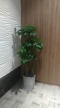 江汉区酒店绿植批发图片