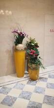 新洲区酒店绿植配送公司图片